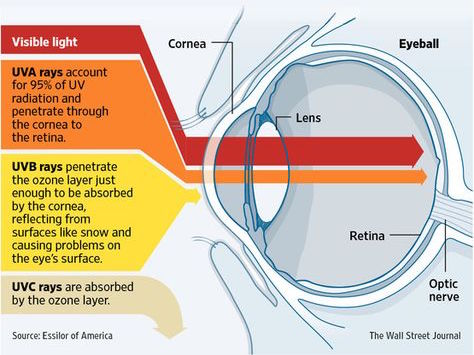UV light eyes diagram